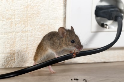 Pest Control in Rotherhithe, South Bermondsey, Surrey Docks, SE16. Call Now! 020 8166 9746